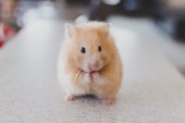 """Dark London: Ποντίκια, κατσαρίδες και άλλοι…""""συγκάτοικοι""""!"""